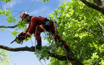 find trusted rated Croydon tree surgeons
