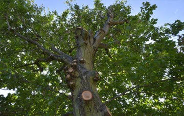 what is Croydon tree surgery?